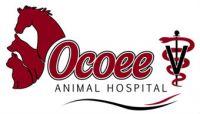 ocoee-animal-hospital.jpg