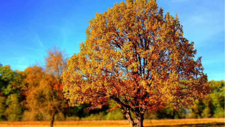 changing leaves blue ridge